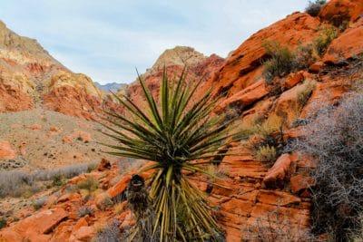 ørkenen, natur, geologi, sandstein, erosjon, landskap, tree, busk, plante, sky, fjell