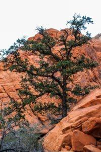 albero, natura, paesaggio, cielo, geologia, canyon, deserto, pianta