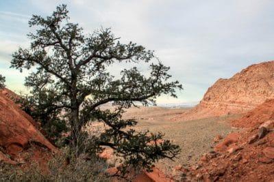 Geología, piedra arenisca, paisaje, árbol, desierto, naturaleza, cielo, knoll, cañón