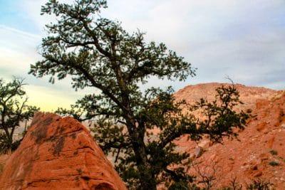 strom, divočina, geologie, krajina, příroda, obloha, knoll, venkovní, Hora