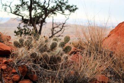 suché, kaktus, příroda, poušť, trn, divočina, strom, flóra, krajina