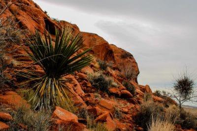 cactus, cloud, desert, nature, tree, beach, sky, fountain, outdoor