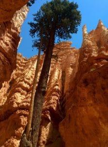pískovec, geologie, údolí, eroze, kaňon, strom, údolí, krajina
