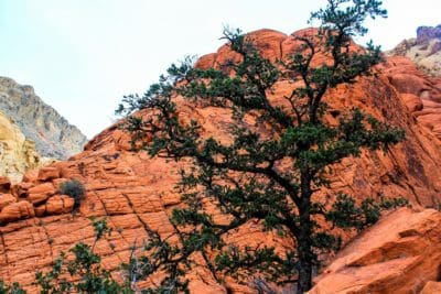 landscape, canyon, mountain, tree, stone, nature, sandstone, desert