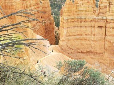 nature, grès, arbre, brnach, sol, érosion, Pierre, paysage, géologie
