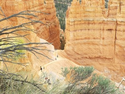 alam, batu pasir, pohon, brnach, tanah, erosi, batu, lanskap, geologi