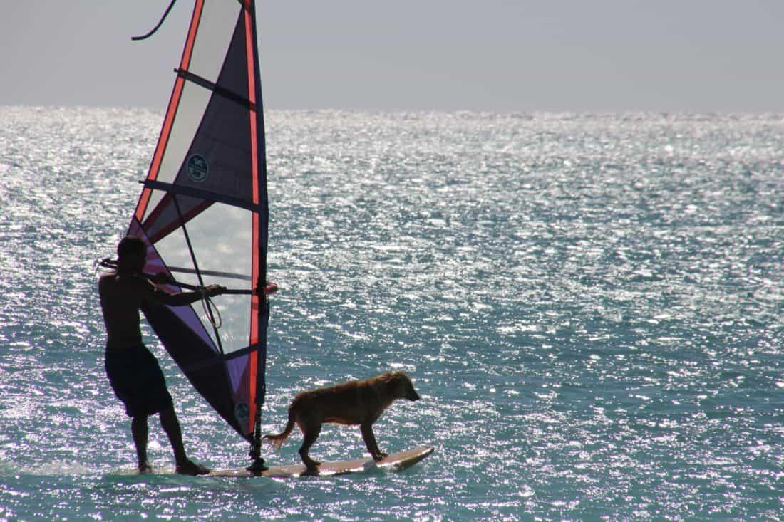 acqua, mare, oceano, sport, cane, vento, moto d'acqua, barca a vela, barca, vela