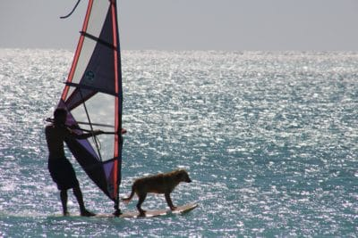 물, 바다, 바다, 스포츠, 개, 바람, 선박, 요트, 보트, 항해