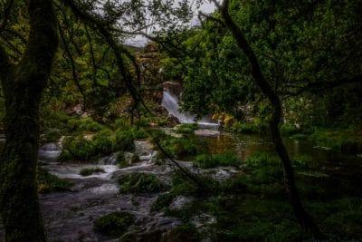 air, kayu, sungai, ekologi, alam, pemandangan, pohon, hutan