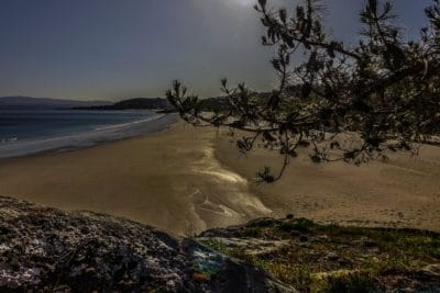landscape, water, beach, seashore, dusk, tree, sand, shore, sky