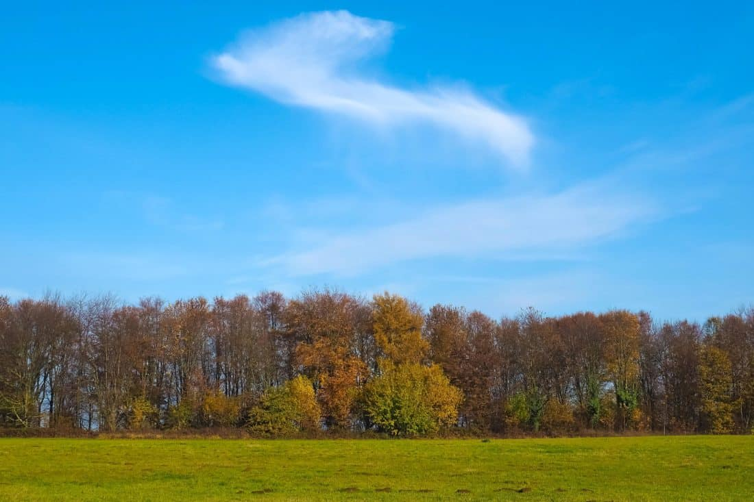 tree, landscape, nature, countryside, wood, grass, rural, forest