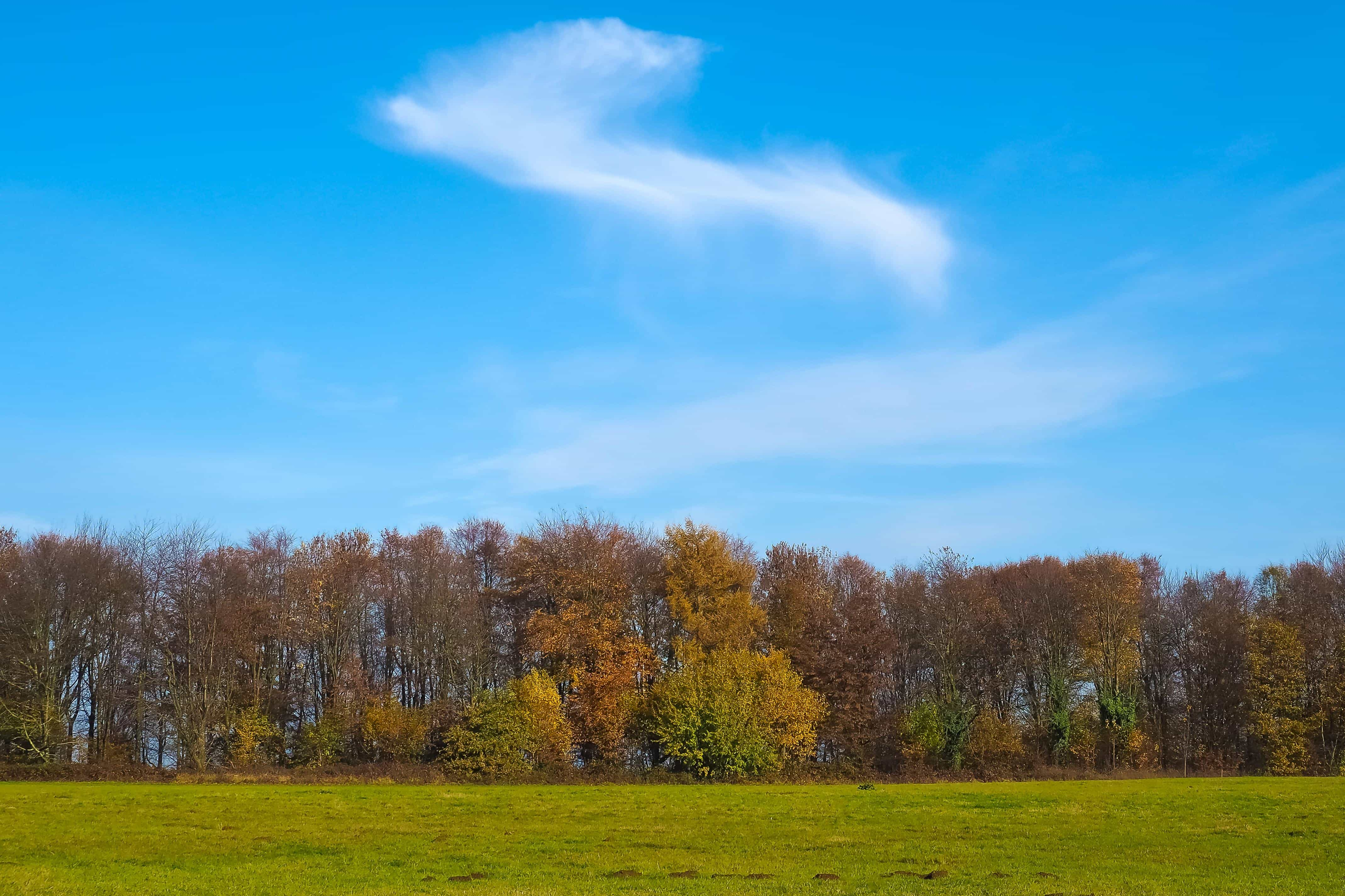free picture tree landscape nature countryside wood