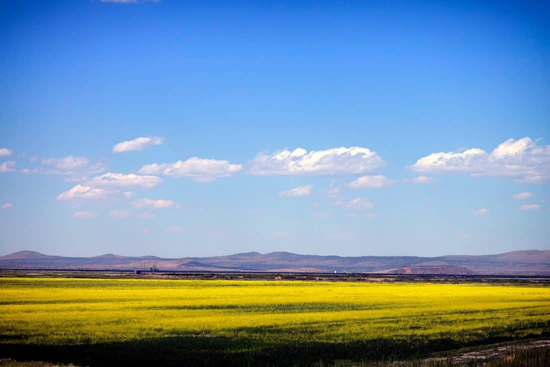 landscape, field, sky, nature, agriculture, farm, blue sky, rural, rapeseed