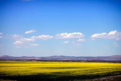 paisaje, campo, cielo, naturaleza, agricultura, granja, cielo azul, rural, colza