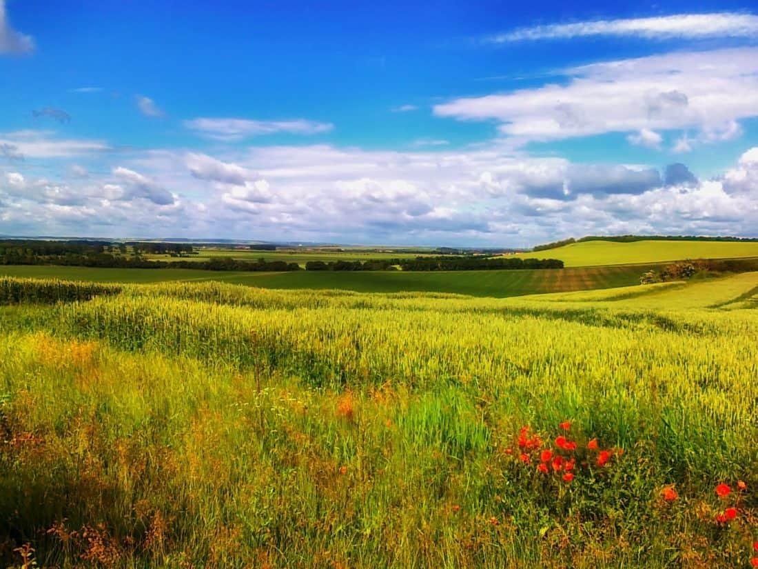 landscape, field, rural, nature, rapeseed, agriculture, blue sky, ruralk, pasture