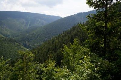 nature, wood, landscape, tree, mountain, conifer, forest, wilderness