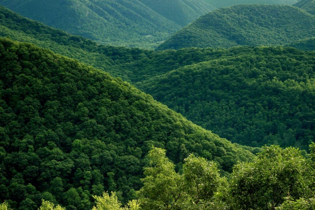nature, wood, tree, green, branch, wilderness, landscape, hill, mountain, forest