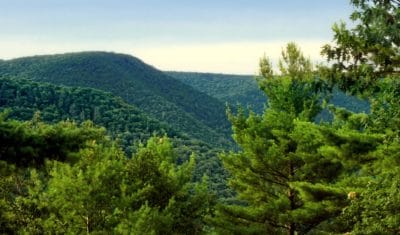 desierto, naturaleza, árbol, madera, bosque, verde, paisaje, cielo, montaña, verano