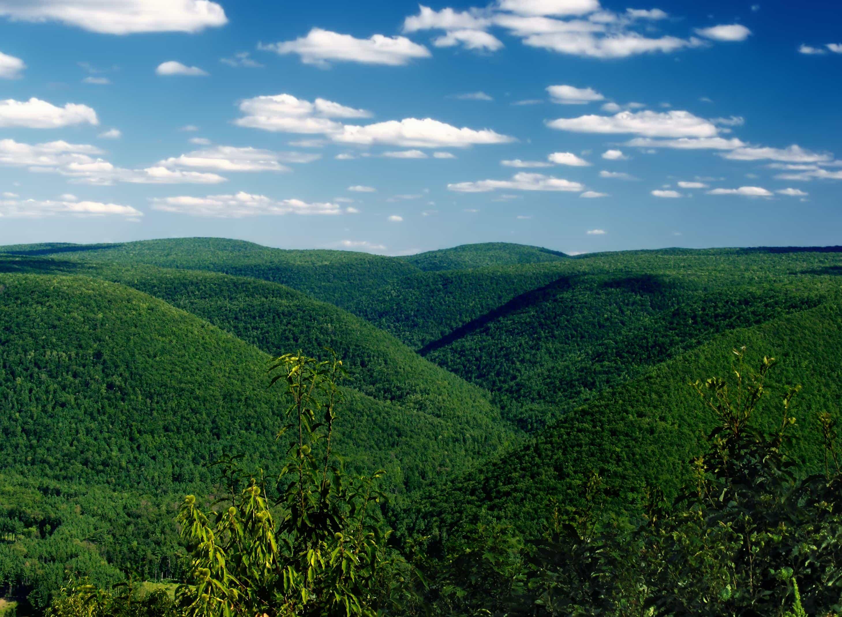 paysage colline vert fort nuage nature sauvage nature arbre ciel plein air - Arbre Ciel