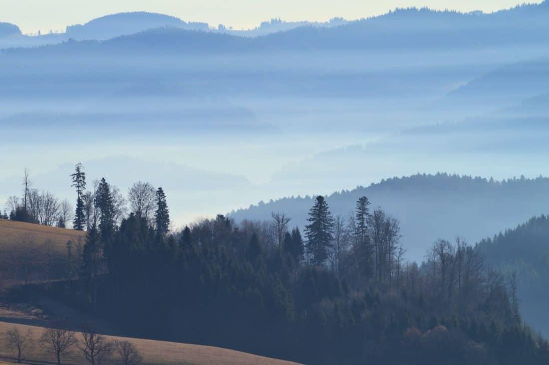 forest, winter, tree, mountain, landscape, fog, wood, mist, dawn