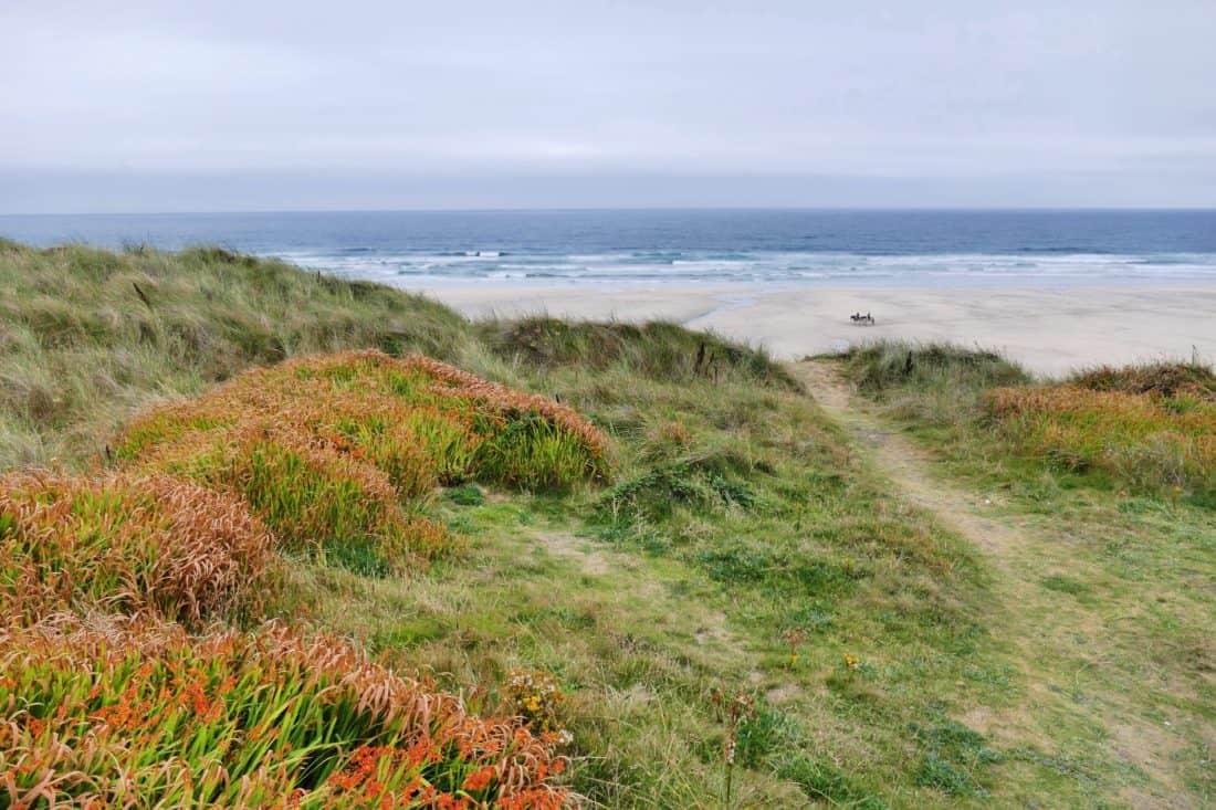nature, landscape, seashore, water, grass, summer, coast