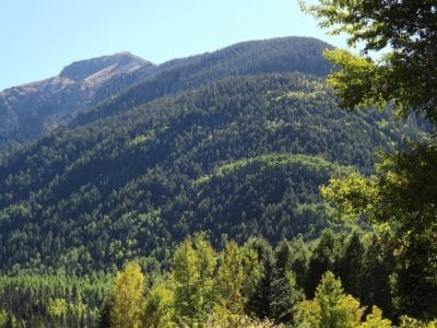 trä, träd, bergstopp, skog, barrträd, natur, liggande, sky, gren