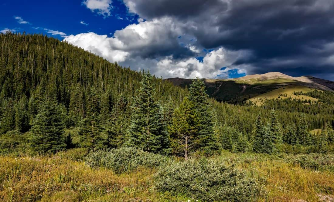 wood, landscape, mountain, nature, mountain peak, geology, tree, conifer, sky