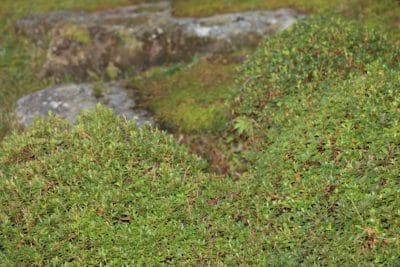 nature, leaf, flora, grass, foliage, landscape, texture, plant