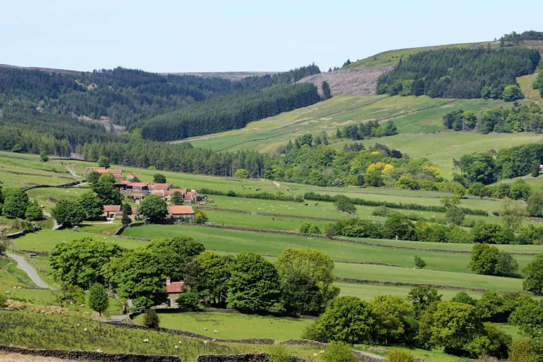 landscape, agriculture, hill, grass, foliage, pasture, nature, countryside, tree