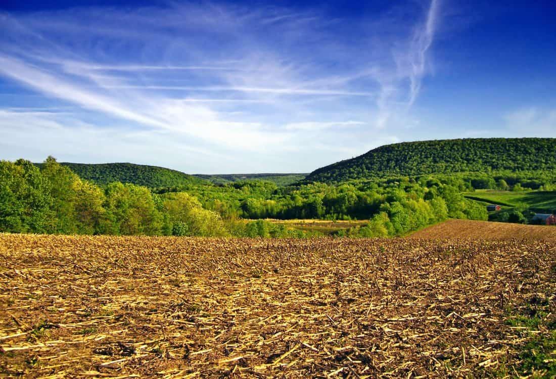agriculture, nature, forest, conifer, geology, landscape, sky, field, plant, rural
