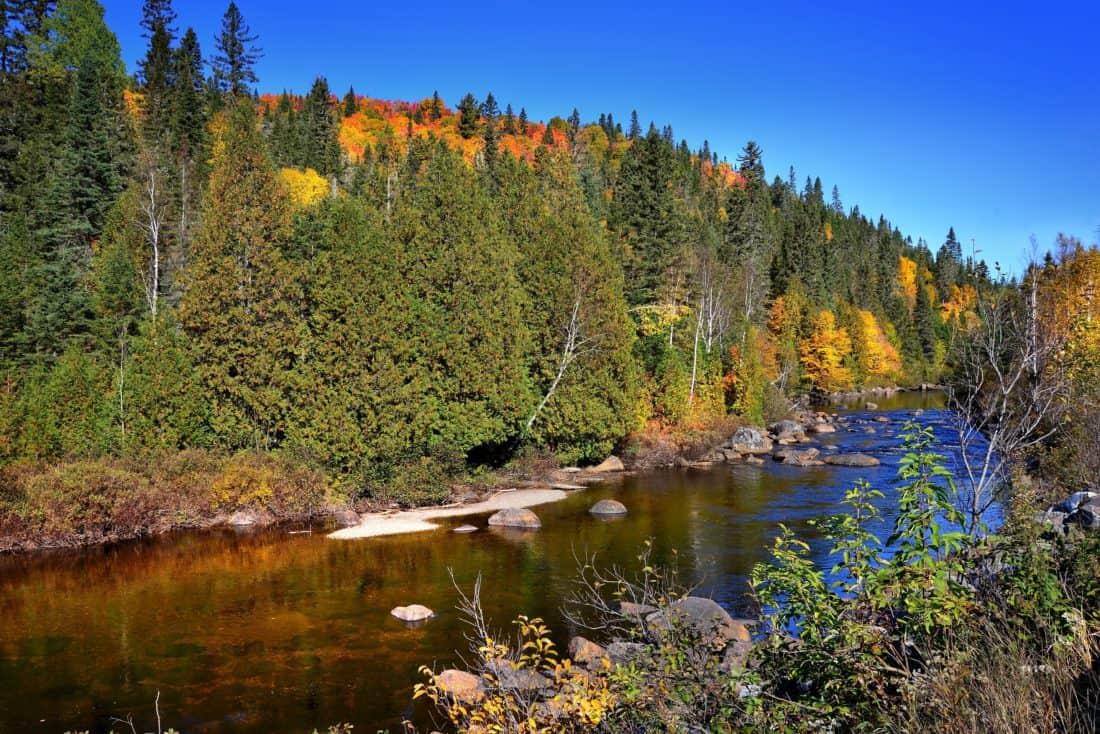 wood, nature, lake, landscape, riverbank, blue sky, tree, water, river, mountain