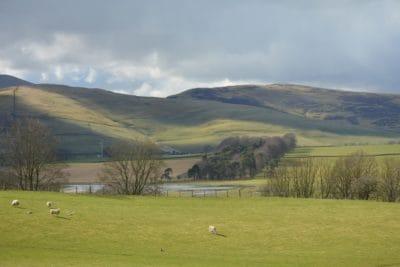 paisagem, pastagem, Prado, ovelhas, montanha, colina, pastagem, grama, agricultura