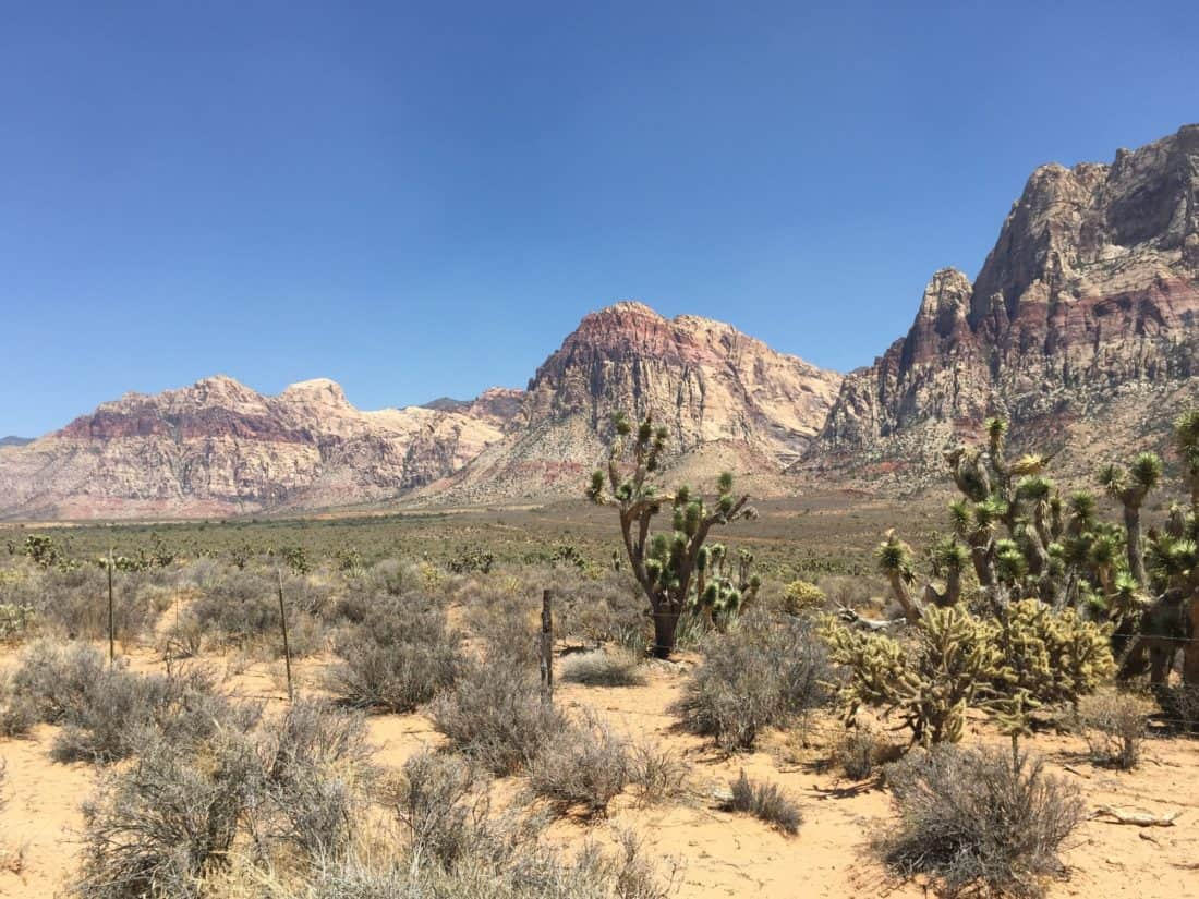 desert, cactus, landscape, dry, mountain, sky, mountain peak, geology, valley