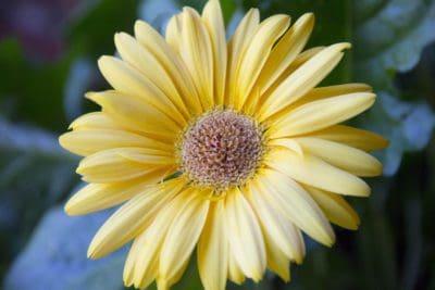 fragrance, macro, pollen, nectar, nature, flower, summer, garden, petal, daisy
