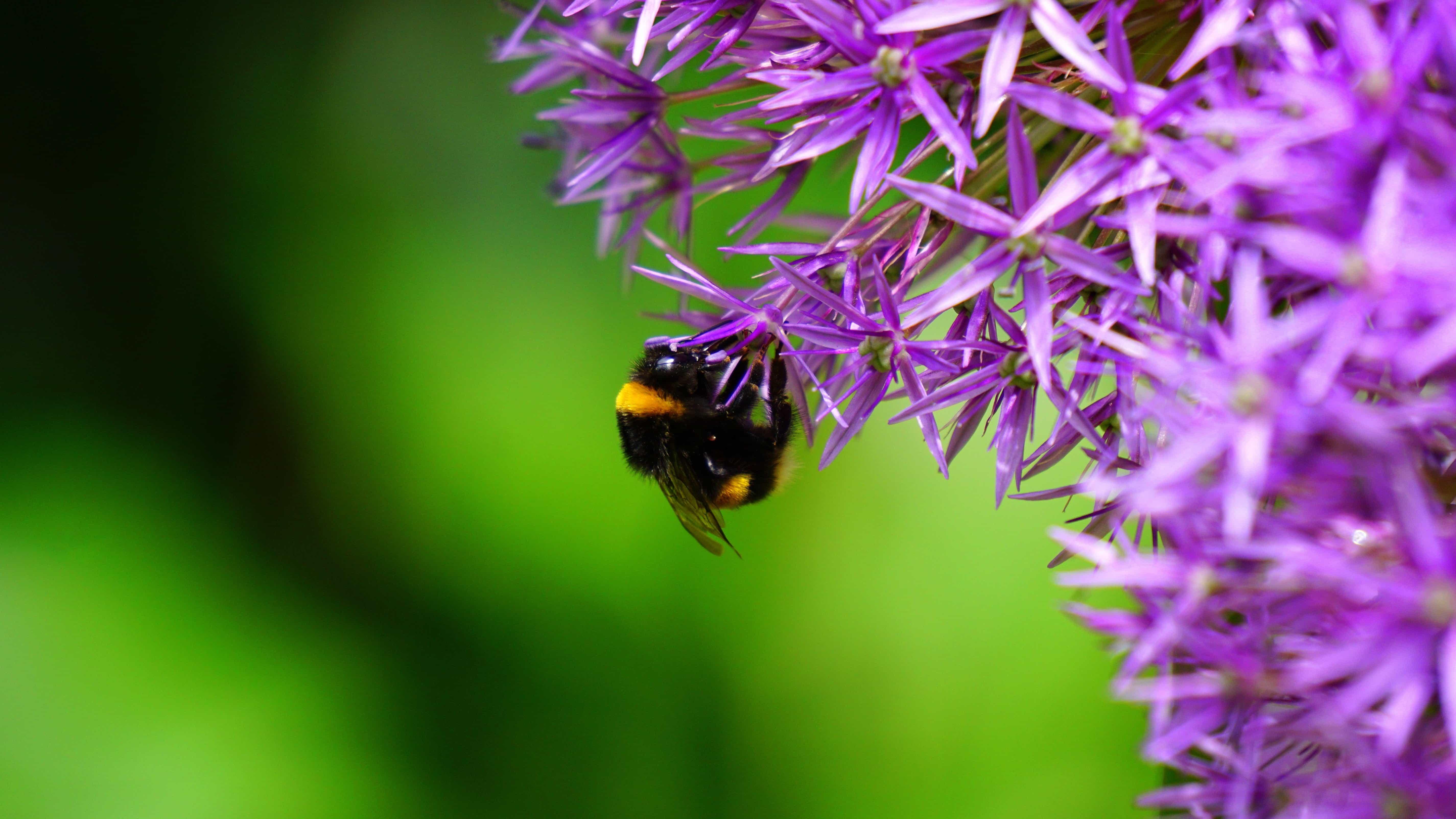 Image libre: nature, insecte, macro, été, pollinisation ...