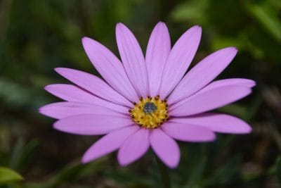 Duft, Makro, Pollen, Nektar, Blume, Natur, Flora, Garten, Daisy, Blütenblatt, Blüte