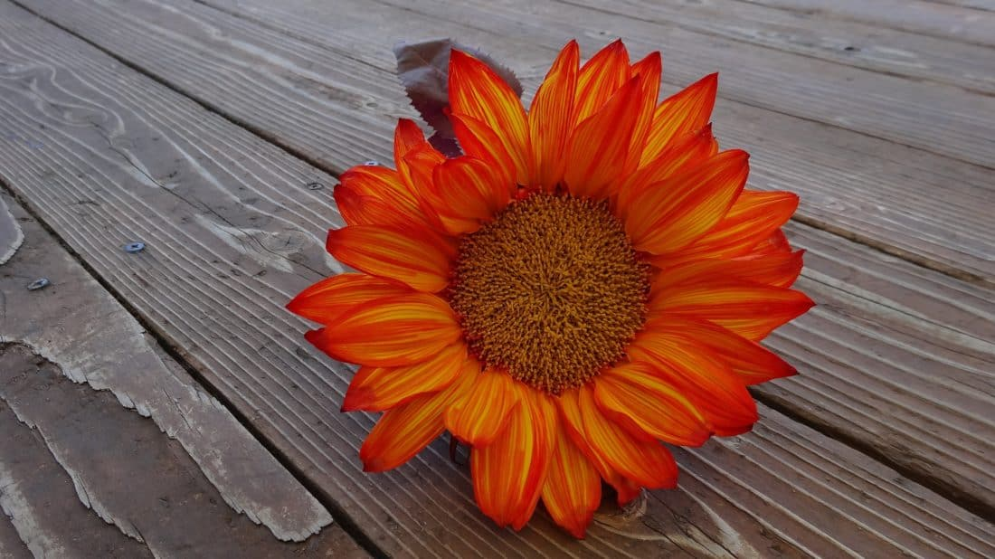 drewno, ozdoba, Martwa natura, natura, lato, kwiat, Płatek, zioło