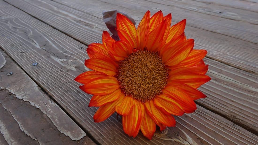 wood, decoration, still life, nature, summer, flower, petal, herb