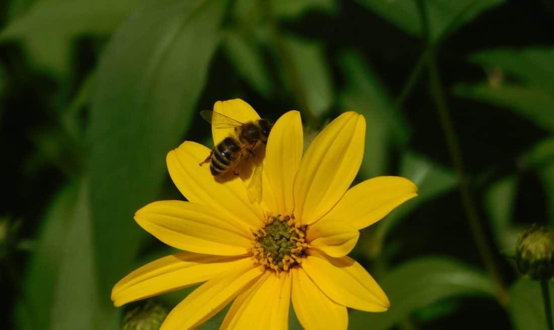 nature, insect, animal, summer, bee, flower, macro, pistil, flora, pollen, leaf