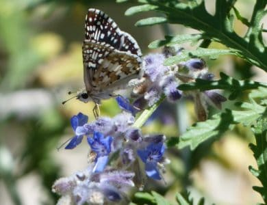 butterfly, macro, wildflower, animal, nature, insect, summer, flower, flora, garden
