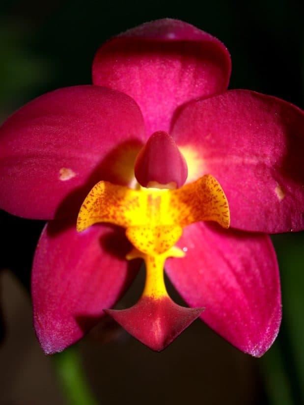 fiore, natura, ombra, macro, flora profumata, dettaglio, giardino esotico, petalo, bello