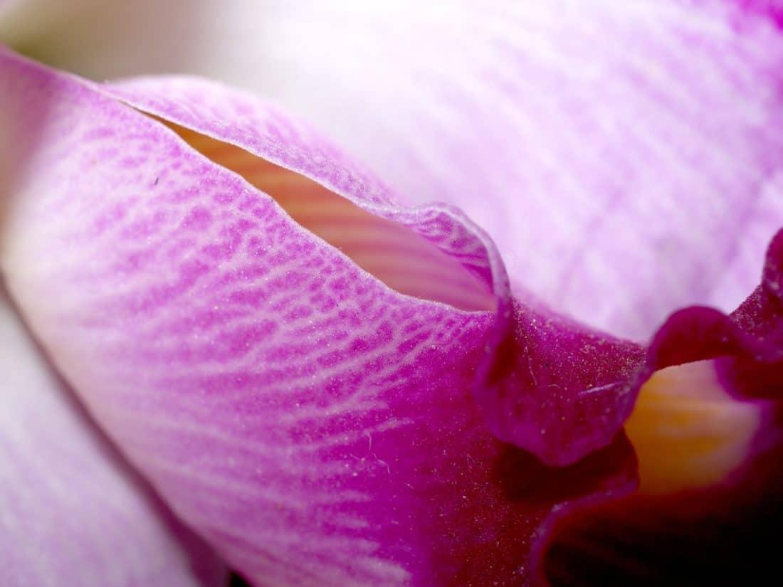 cvijet, prirode, flore, orhideja, makronaredbe, pelud, vrt, prekrasan, list, latica
