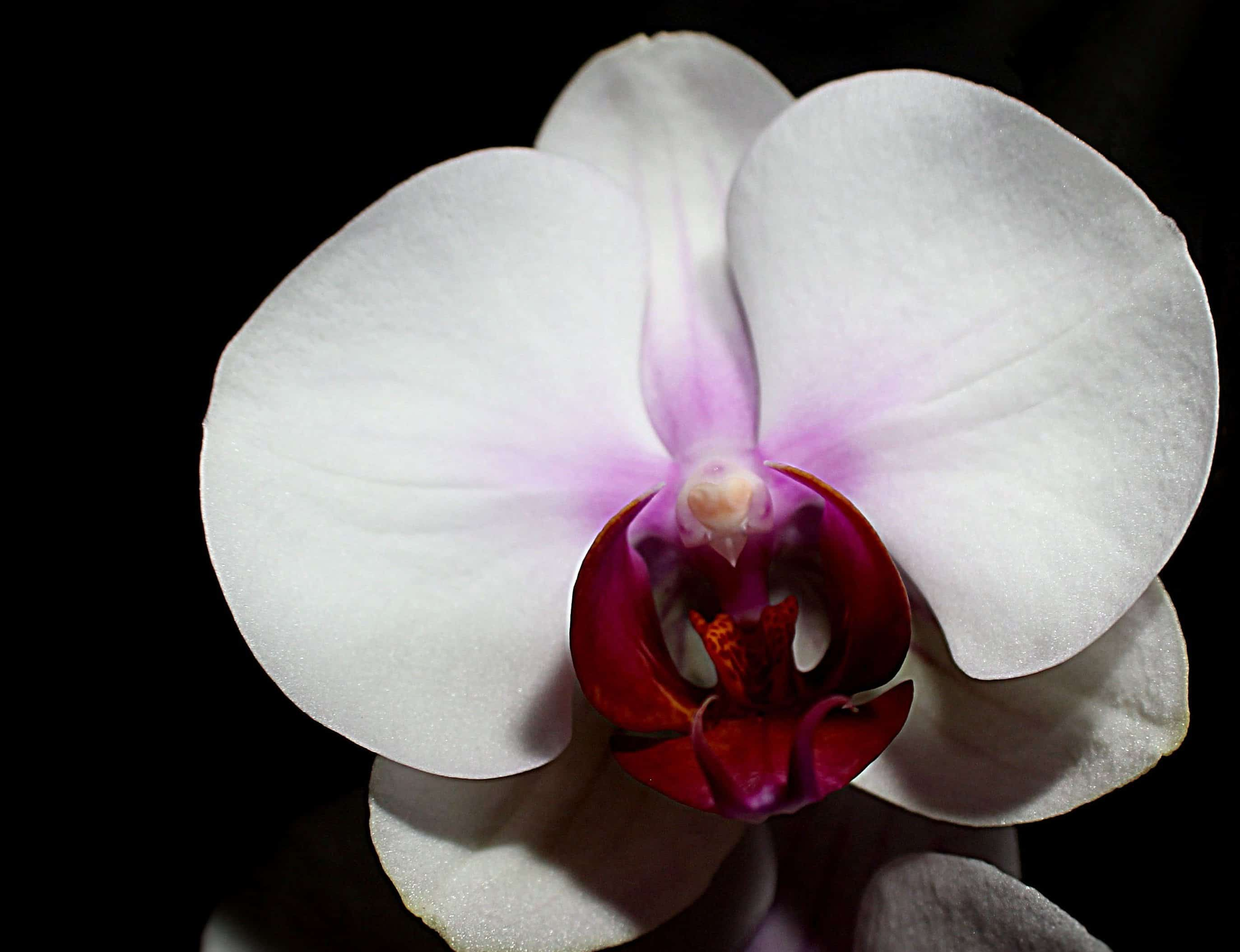 Free Picture Flower Beautiful Flora Exotic Petal Nature White