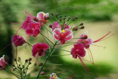 nature, fleurs, flore, été, été, herbe, jardin, feuille, plante, arbuste