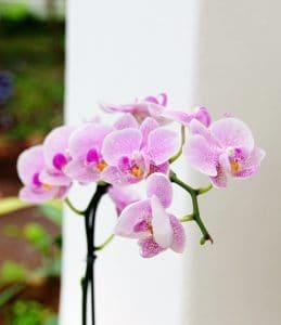 natura, orchidea, pistillo, fiore, flora, elegante, foglia, estate, petalo