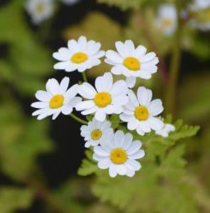 flower, nature, vegetation, flora, petal, summer, garden, plant