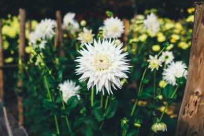 꽃, 정원, 식물, 자연, 초원, 여름, 잎, 데이지, 허브