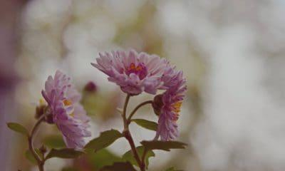 flower, nature, flora, leaf, pink, macro, blossom, petal, plant