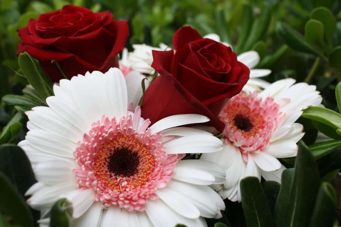 Image Libre Fleur Bouquet Nature Flore Feuille T P Tale Jardin Agencement