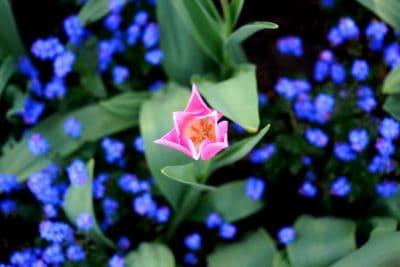 flores, detalles, macro, hierba, pistilo, jardín, naturaleza, planta